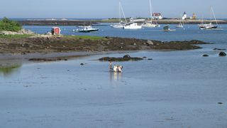 Kennebunkport cottage photo - Kids playing out front - low tide