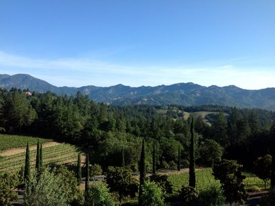 Our vines and view (taken by one of our guests).