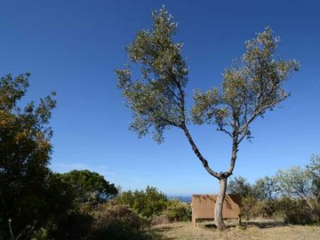 Beyond the Lower Garden, you can escape to the 'lookout' olive...