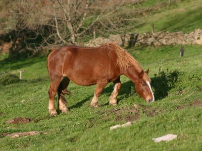 local breed of horse on the hills around house