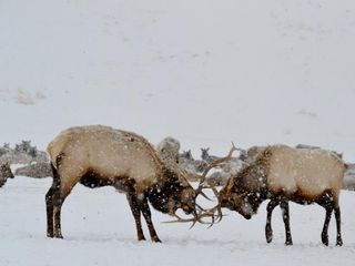 Jackson Hole lodge photo - Don't forget to meet the neighbors!