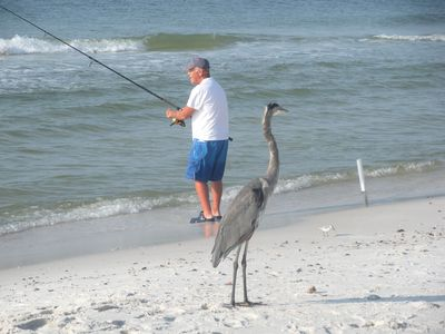 Fishing is enjoyed by many. Hank the heron waits hopefully.