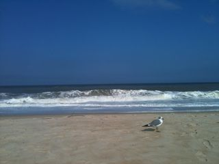 Rehoboth Beach cottage photo - Beautiful Atlantic Ocean in Summer