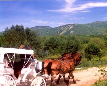 Next door -carriage/wagon/pony & horseback rides
