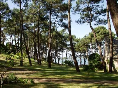 Surrounding the villa, a serene garden of pine trees