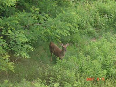 Greenbrier County lodge rental - Your Neighborhood Deer coming to say Good Morning!