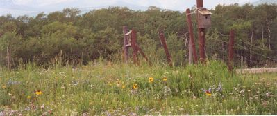 Wildflowers and bluebird houses.