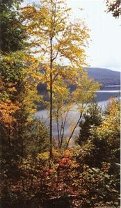 view of lake from house in fall
