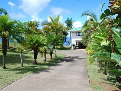 Front yard with tropical plants