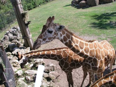 Feed the giraffes at the beautiful Jax Zoo! The kids will LOVE it! 25 min away!