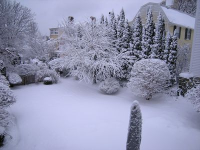Winter scene of garden