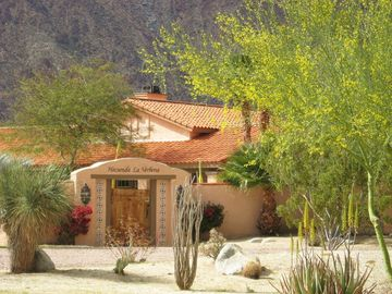 Hacienda's Blooming Palo Verde in Spring.