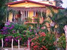 Vibrant bursts of color adorn the house & property - La Cruz de Huanacaxtle house vacation rental photo