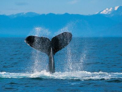 World Famous Whale Watching!!!