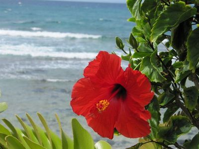 Hapuna Beach Hibiscus at the Prince Hotel