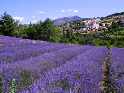 Lavendar Fields in the Luberon