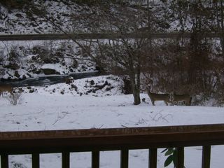 Asheville house photo - Deer grazing in front of the Cane River