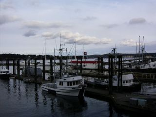 Nanaimo apartment photo - some of the boats in Nanaimo harbor. Looking from seawall.
