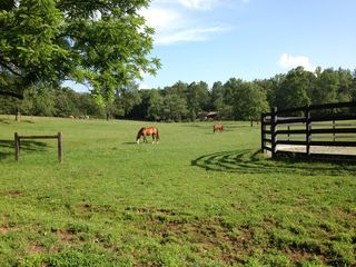 Asheville cottage photo - ~Horses grazing in field~