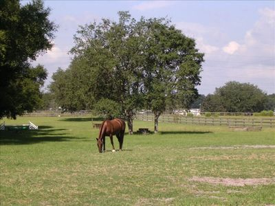 Sacramonte Farm, Summerfield, FL