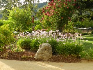 Calistoga house photo - Partial. Summer garden. Hammock in background.