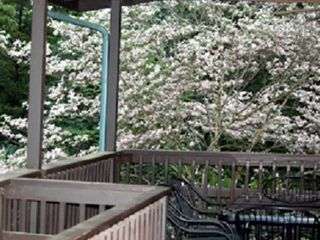 Branson cabin photo - covered porch with dogwood in bloom!