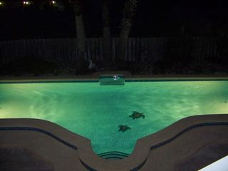 South Padre Island house photo - pool at night!