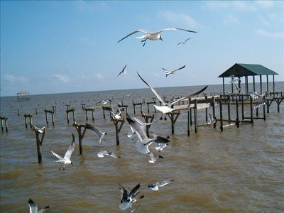 Have fun feeding the seagulls