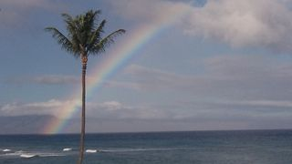 Lahaina condo photo - Typical view from our lanai.I took this picture one morning while having coffee.