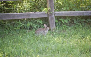An At Harvest Home Bunny waiting for you to be a guest.