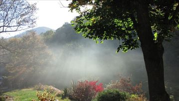 Asheville cottage rental - VIEW just outside your cottage when the mist meets the morning fog.