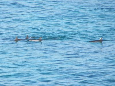 A school of Dolfins swimming by!
