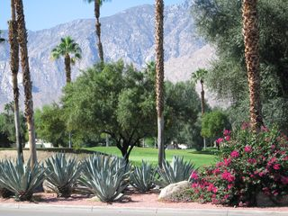 Palm Springs condo photo - A paradise landscaped with a variety of desert flora, cactus and towering palms