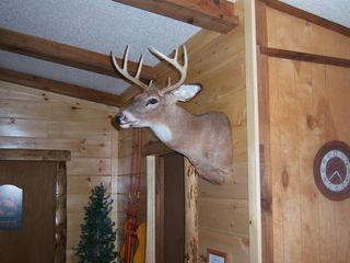 Cosby cabin photo - Trophy White Tail
