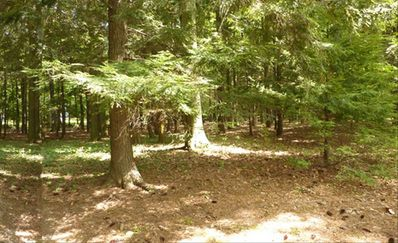 Wooded half acre lot facing the private access road