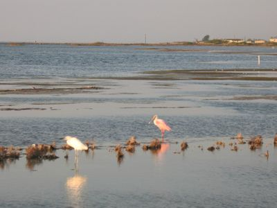 The Laguna Madre is world renowned for being a birding paradise.