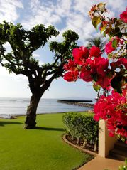 Maalaea condo photo - Milowai's professional landscaping and immaculate grounds are lovely.