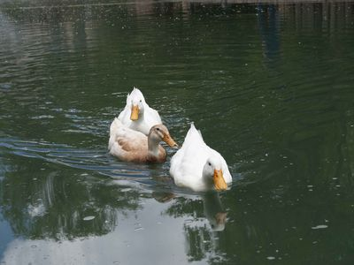 Walk or drive to the UNM duck pond for a picnic with the kids (turtles too).