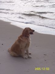 Fort Morgan house photo - Pets Welcomed! Meet Sadie - She Loves the Beach