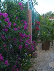 Tulum house photo - beautiful gardens