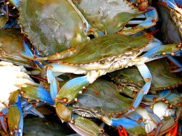 Maryland blue crabs...come join the feast! Hit Annapolis Seafood Market enroute.