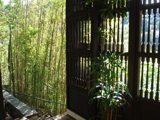 Hollywood house photo - Bamboo trees outside 2nd. bedroom