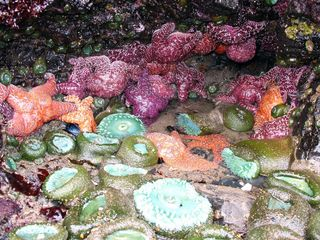 Lincoln City house photo - Explore Starfish and sea life in nearby tidepools
