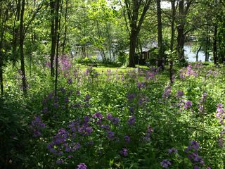 Lake Koshkonong cottage photo - Flowers