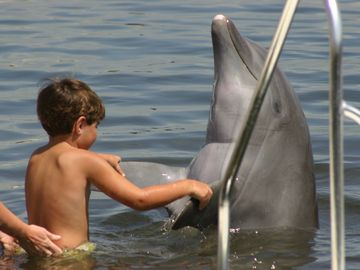 Visit the Dolphin Research Center only 5 minutes away.