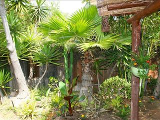 Cardiff by the Sea cottage photo - Lush garden view with palms and bamboo galore
