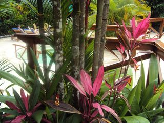 Playa del Coco condo photo - Hot Spring Resort at the foot of Arenal Volcano