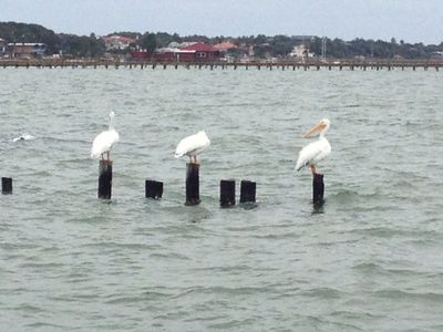 A favorite siting in Oct - White Pelicans in Rockport/Fulton area
