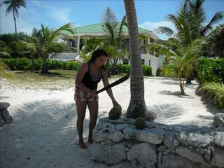 Ambergris Caye house photo - Pick and cut your own coconuts