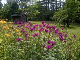 Woodstock house photo - Large Yard with wildflower Garden ~ Enjoy the Humming Birds